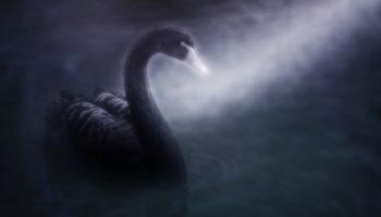 O dvoch čiernych labutiach